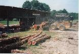Red cedar logs at the sawmill